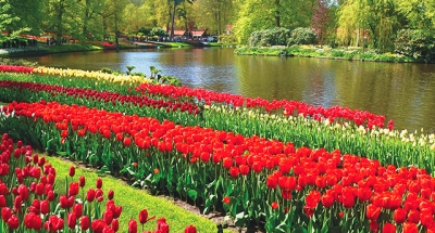Lisse, Países Bajos