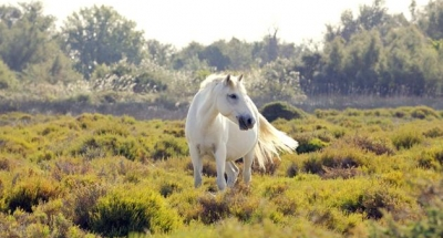Witte paarden, die vrij rondlopen