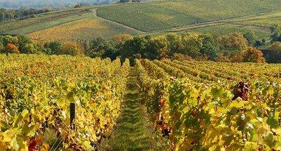 Los famosos viñedos de Sancerre