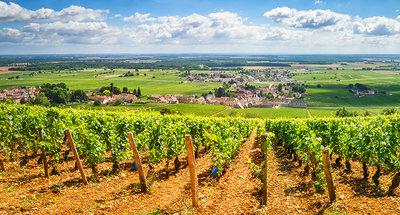 Viñedos en Borgoña