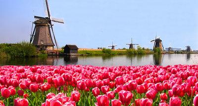 Molino de viento y campo de tulipanes