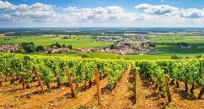 Viñedos en el Valle del Loire-Nivernais