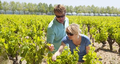 Cata de vinos en Borgoña