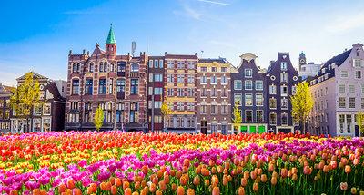 Campo de tulipanes en Amsterdam