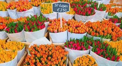 Tulipanes en un mercado, Países Bajos