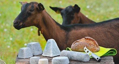 Cabras y queso
