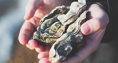 Hombre enseñando ostras