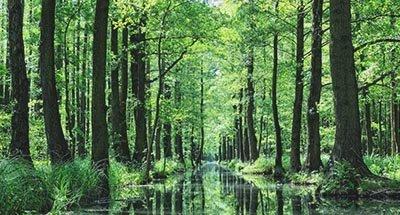 Bosque en Spreewald en el Brandeburgo