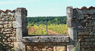 Viñedos y una casa antigua en Charente