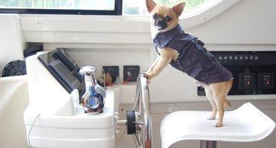 Recomendaciones para un crucero fluvial con tu perro