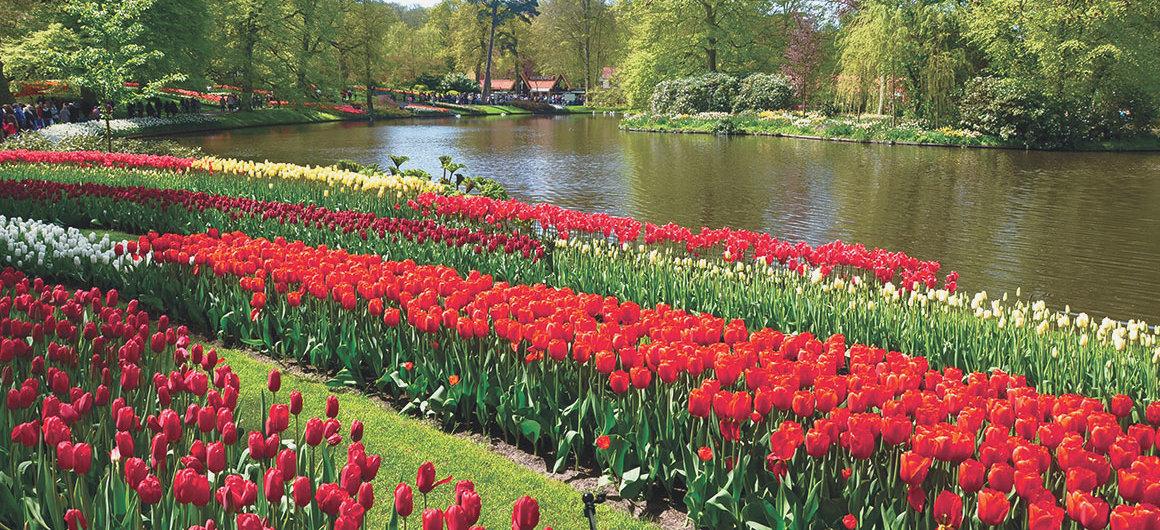 Tulipanes en el parque floral de Keukenhof en Lisse, Países Bajos
