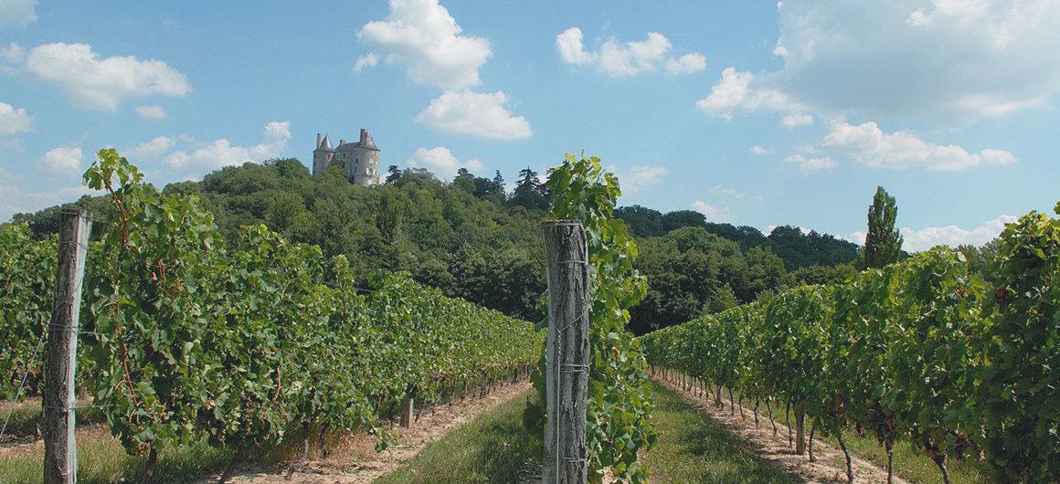 Los viñedos de Buzet, Aquitania
