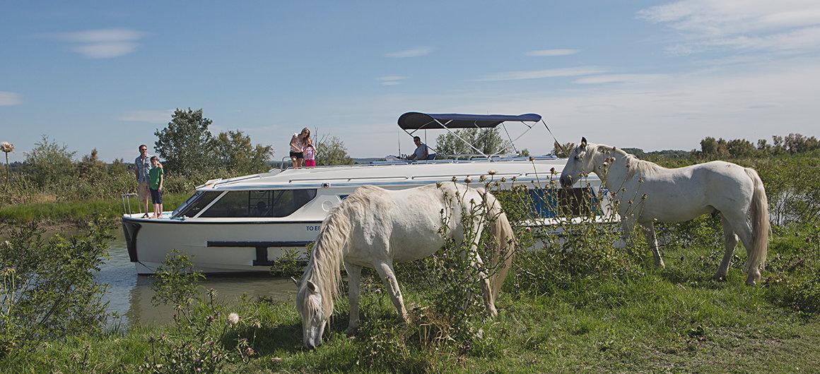 El Vision y caballos salvajes